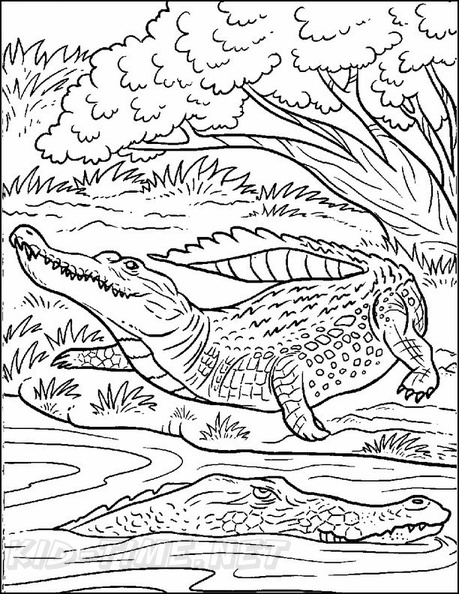 Alligator Coloring Book Page | Free Coloring Book Pages ...