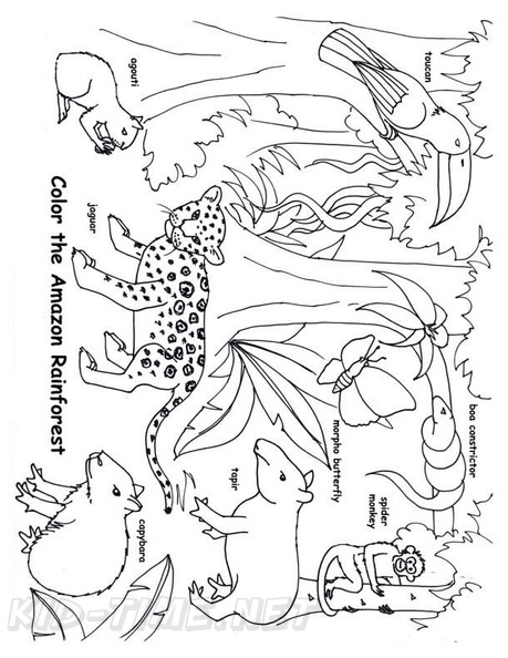 coloring book ~ Coloring Book Rainforest Pages To Print Photo ... | 594x459