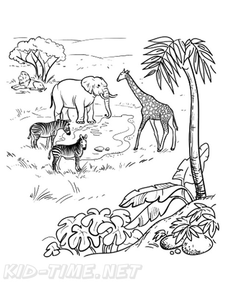 Amazon Rainforest Animals Coloring Book Page Free Coloring Book