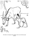 Antelope Coloring Book Page
