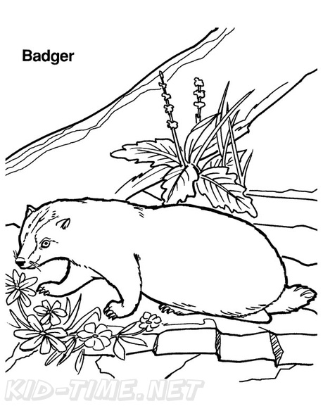Badger Coloring Page | Coloring pages, Badger images, Badger pictures | 594x459