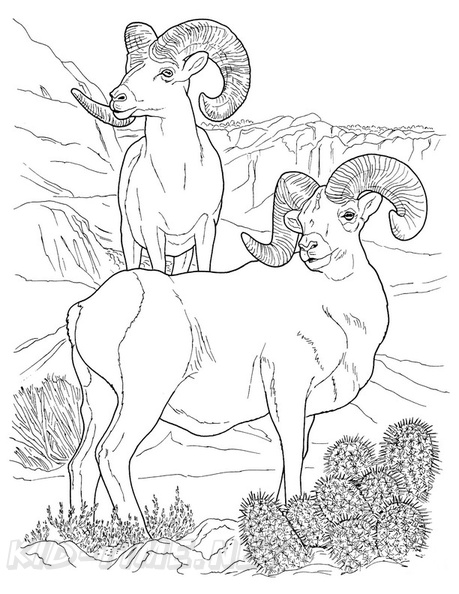Bighorn Sheep coloring page | Free Printable Coloring Pages | 594x459