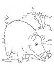 boar-coloring-pages-011