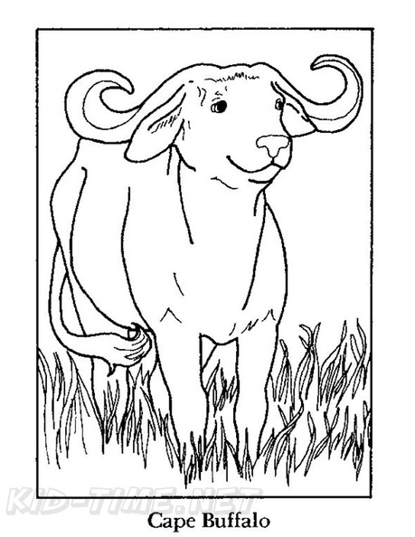 Buffalo Coloring Book Page Free Coloring Book Pages Printables