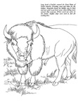 Buffalo Coloring Book Page