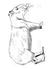 Capybara Coloring Book Page