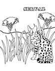 Serval Cats Coloring Book Page