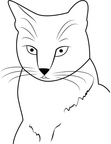 American Shorthair Cat Coloring Book Page