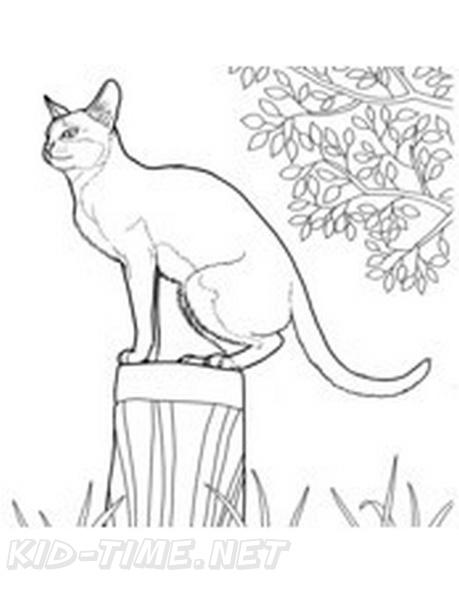Birman_Cat_Coloring_Pages_007 Me