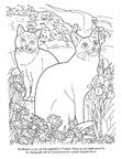 Korat Cat Breed Coloring Book Page
