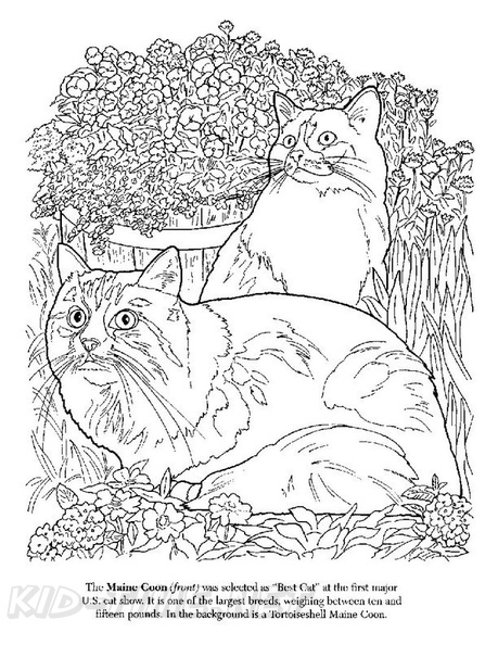 Maine_Coon_Cat_Coloring_Pages_002.jpg
