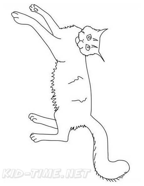Maine Coon Cat Breed Coloring Book Page Free Coloring Book Pages