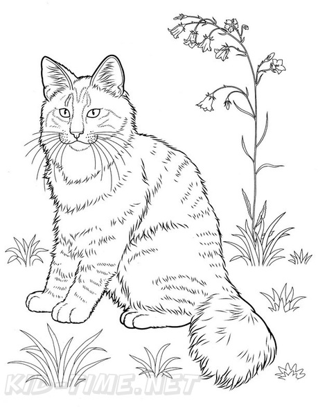 norwegian forest cat cat breed coloring book page free coloring Breakaway Haven norwegian forest cat cat breed coloring book page free printable download printables