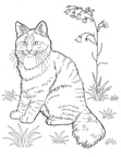 Norwegian Forest Cat Cat Breed Coloring Book Page