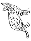 Ocicat Cat Breed Coloring Book Page