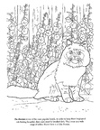 Persian Cat Breed Coloring Book Page