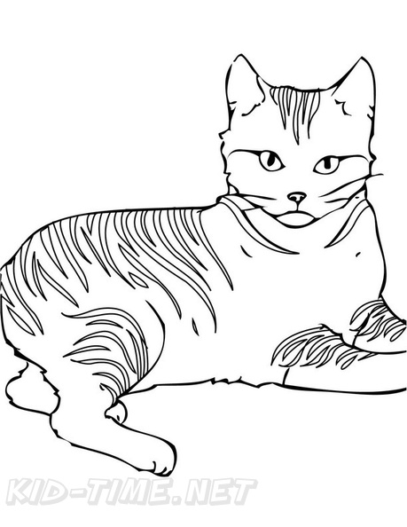 Pixie_Bob_Cat_Coloring_Pages_001.jpg
