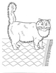 Ragdoll Cat Breed Coloring Book Page