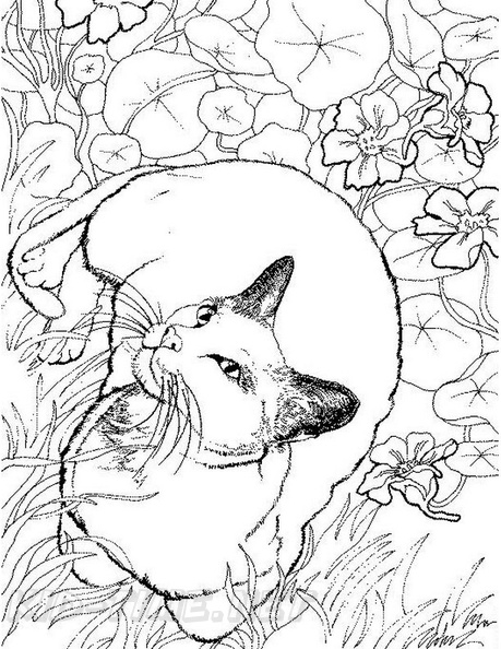 Realistic Cats Coloring Book Page Free Coloring Book Pages Printables