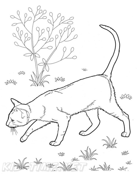 - Realistic Cats Coloring Book Page Free Coloring Book Pages Printables