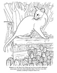 Siamese Cat Breed Coloring Book Page