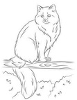 Siberian Cat Coloring Book Page