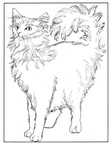 Turkish Angora Cat Coloring Book Page