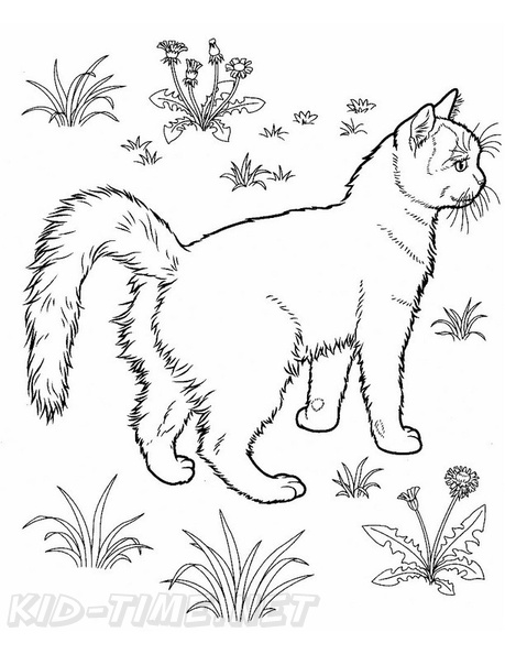 Turkish_Van_Cat_Coloring_Pages_001.jpg