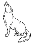 Coyote Coloring Book Page