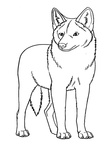 Coyote Coloring Pages 016