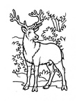 Deer Coloring Pages 024