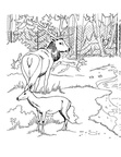 Deer Coloring Pages 035