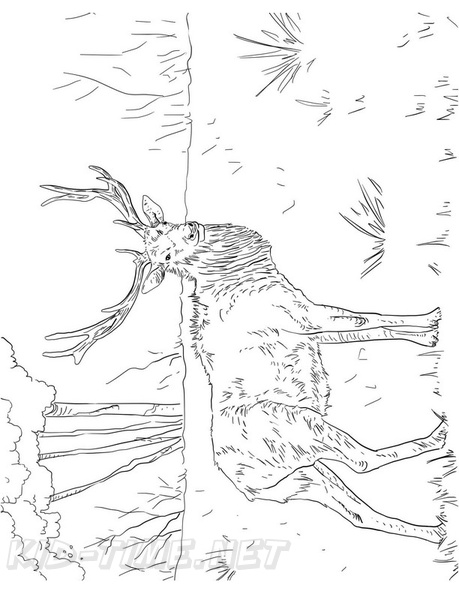 Elk Coloring Book Page Free Coloring Book Pages Printables