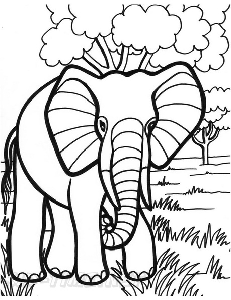 - Elephant Coloring Book Page Free Coloring Book Pages Printables