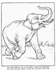Realistic Elephant Coloring Book Page