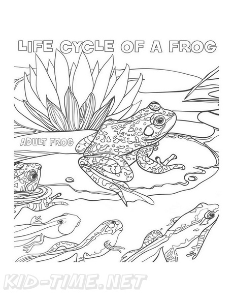 Frog Life Cycle Coloring Book Page Free Coloring Book Pages Printables