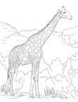 Realistic Giraffe Coloring Book Pages