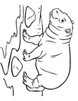 Baby Hippopotamus Hippo Coloring Book Page
