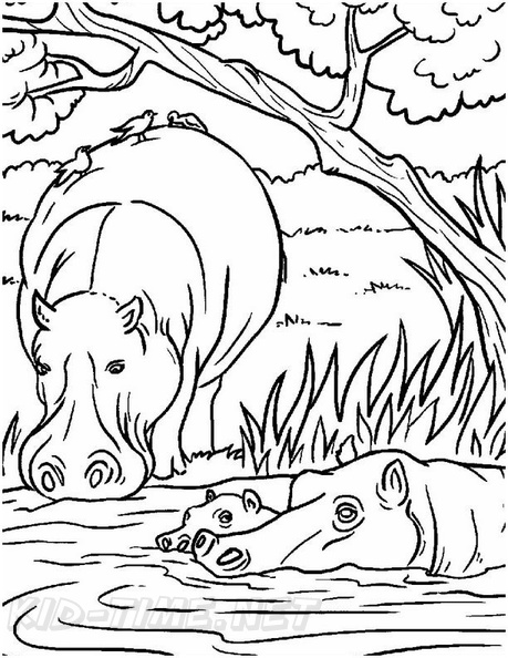 Realistic Hippopotamus Hippo Coloring Book Page Free