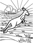 Kangaroo Coloring Book Page