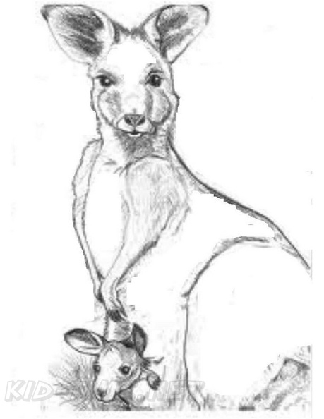 Realistic Kangaroo Coloring Book Page Free Coloring Book Pages