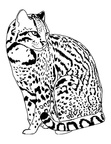 Ocelot Coloring Book Pages Coloring Book Page