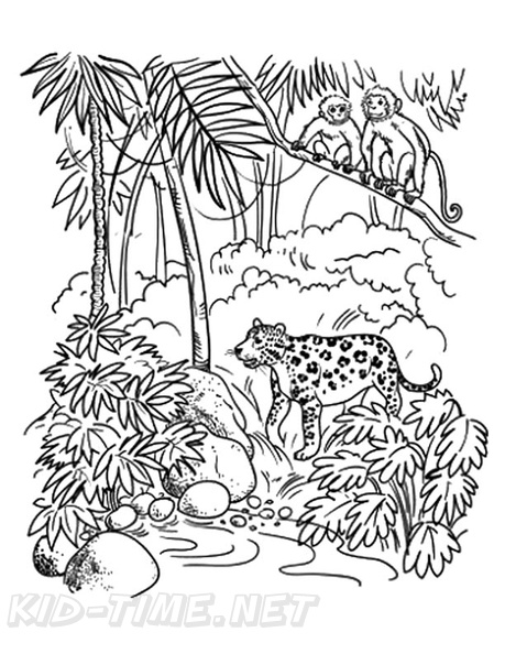 Amazon Rainforest Animals Coloring Book Page Free Coloring Book Pages Printables