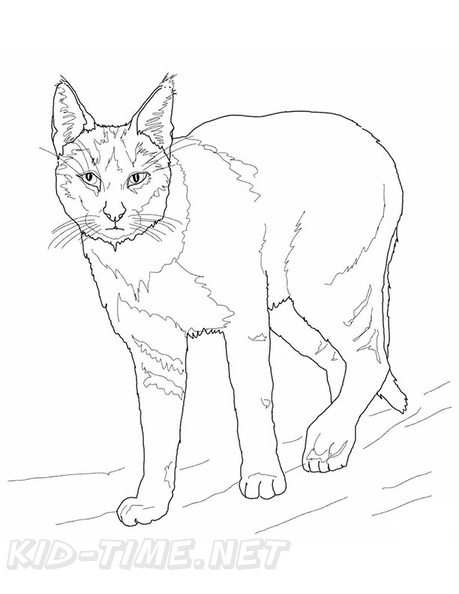 Bobcat Coloring Book Page Free Coloring Book Pages Printables